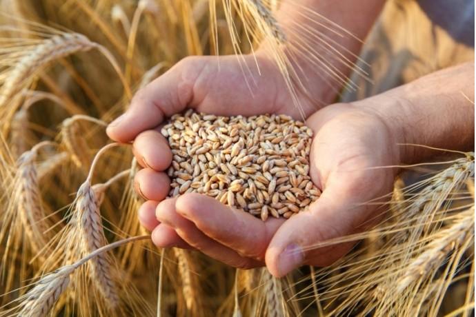 小麦類はダイエット中にあり?なし?